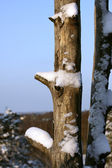 Dry trunk in winter. — Stock Photo
