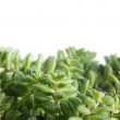Stock Photo: Succulent plant