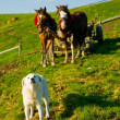 Dog and horses — Stock Photo