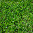 Royalty-Free Stock Photo: Grass green