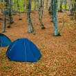 Tent in a forests campsite - Stock Photo