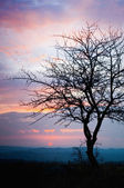 Oak tree at sunset — Stock Photo