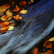 Autumn leaves — Stock Photo #1567801