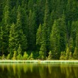 Stock Photo: Pine mountain lake