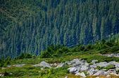 Paisagem montanhosa — Foto Stock