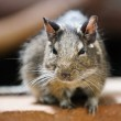 Rodent sits on a rock. Photos from a great depth of field — Stock Photo #2101478