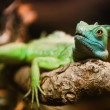 Stock Photo: Reptiligreen