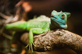 Reptilian green — Stock Photo