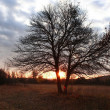 Bare tree at dawn — Stockfoto