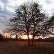 albero nudo all'alba — Foto Stock