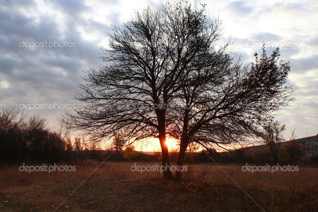 Bare tree at dawn in a rural landscape — Stock Photo #1101677