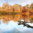 Landscape with wooden river in autumn fo — Stock Photo