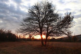 Bare tree at dawn — Stock Photo