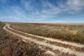Wild steppe with dirt road — Stock Photo