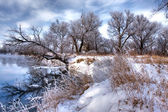 Winter forest river 3 — Stock Photo