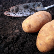 Potato — Foto de Stock