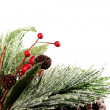 Decorative pine branch — Stock Photo