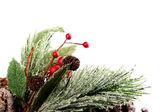 Decorative pine branch — Stock Photo
