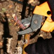Autumn pruning - Stockfoto