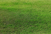 Green grassy lawn — Stock Photo