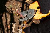 Autumn pruning — Stock Photo