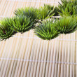 Japanese pine — Stock Photo