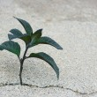 Plant in a crack — Stockfoto
