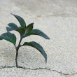Stock Photo: Plant in a crack