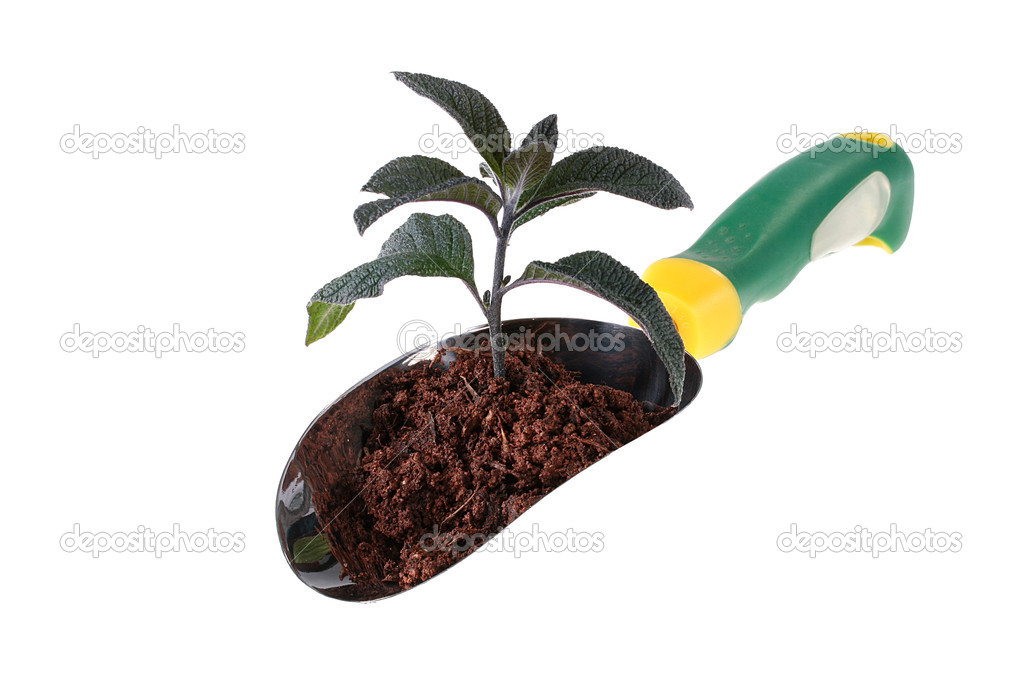 Young green plant in the earth which is located in a scoop for garden works. — Stock Photo #1897525