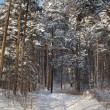 Foto Stock: Winter wood.