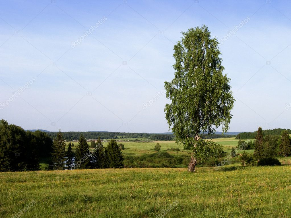 Lonely tree on a background of the blue sky. A landscape.  Stock Photo #2218582