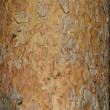 Pine tree bark texture — Stock fotografie #1166744