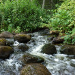 Stock Photo: Small creek in forest