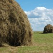 Haystacks on the meadow - Stock Photo