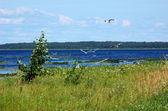 Seagulls flying over lake — Stock Photo