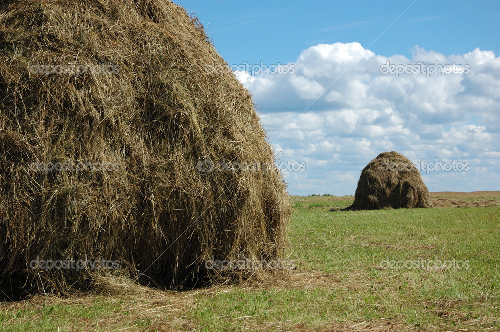 Haystacks in the field, clouds in the sky  Stock Photo #1185682