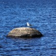 Sea gull on stone — Stock Photo
