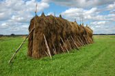 Big haystack in the field — Stock Photo