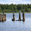 Gulls sitting on wooden columns — Stock Photo
