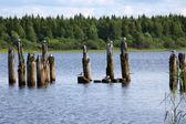 Gulls sitting on wooden columns — Stock Photo