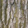 Old tree bark texture - Stockfoto
