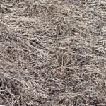 Dry grass background — Stock Photo #1277675