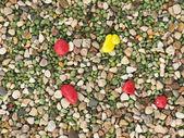 Color gravel texture — Stock Photo