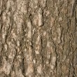 Old tree bark background - Stock Photo