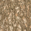 Brown bark surface - Stock Photo