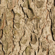 Rough brown bark background - Stock Photo
