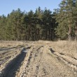 Стоковое фото: Earth road at forest edge