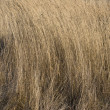 Dry yellow grass - Foto Stock