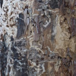Old tree trunk texture - Foto Stock