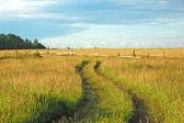 Грунтовая дорога в поле — Стоковое фото